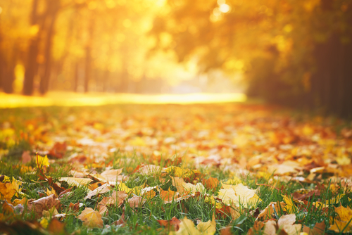 Easy Ways to Manage Leaf Cleanup This Fall