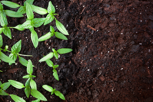 4 Tips for Winter Composting